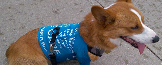 Dog with Eastern Bank tshirt on