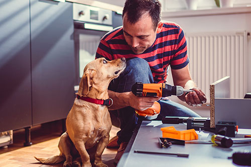 Man with dog doing home renovation